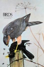 birds 87